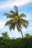 Vista delle palme contro il cielo — Foto Stock