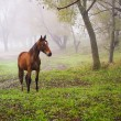 A graceful horse in the pasture. Autumn misty morning. — Stock Photo