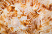 Seashell closeup. Background — Stock Photo