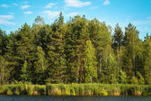 View of the mixed forest — Stock Photo