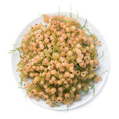 Top view of plate with white currant isolated on white backgroun — Stock Photo