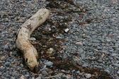 Spiaggia di ghiaia con driftwood — Foto Stock