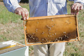 The beekeeper has control honeycomb — Stock Photo