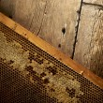 Honeycomb on frame with fresh honey — Stock Photo #31804543