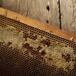 Honeycomb on frame with fresh honey — Stock Photo #31809077