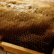 Honeycomb on frame with fresh honey — Stock Photo