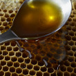 Spoon full of honey on honeycomb — Stock Photo