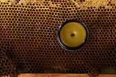 Honeycomb with fresh honey and a vase with cera balsam — Stock Photo