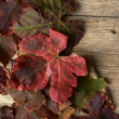 Autumn red grape leaves over wooden background. — Stock Photo