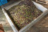 Olive oil press — Stock Photo