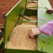 Stock Photo: Loading seeding machine with wheat seeds and fertilizer