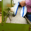 Loading seeding machine with wheat seeds and fertilizer — Stockfoto