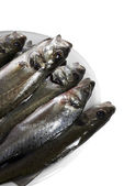 świeże ryby, okoń morski — Zdjęcie stockowe