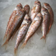 Fresh fish, mullet — Foto Stock