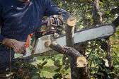 Man without the necessary protection, cuts tree with chainsaw — Stock Photo