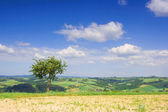 Landscape with a lonely tree and blue sky — Stock Photo