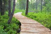 Trä gångbron — Stockfoto
