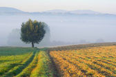 Landscape with a lone tree in fog — Stock Photo