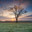 Stock Photo: Solitary tree in golden sunrise