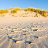 Dune on Beach at Sunset — Stock Photo