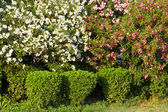 Hedge of bushes with mulch and grass in a curved pattern — Stock Photo
