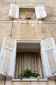 Okno s květinami, dalmácie, zadar, chorvatsko — Stock fotografie