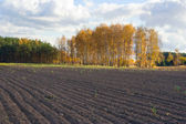 Autumn agricultural landscape — Photo