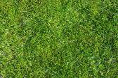 Grass Field Top View Texture — Stock Photo