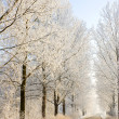Winter frost in the wild forest. Deep wilderness nature — Stock Photo