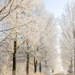 Stock Photo: Winter frost in the wild forest. Deep wilderness nature