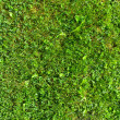 Grass Field Top View Texture - Stock Photo