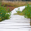 Wooden foot bridge — Stock Photo
