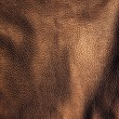 Leather background close up  — Stock Photo