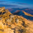 Autumn mountain in Bieszczady, Poland — Stock Photo