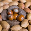 Stock Photo: Mixed nuts in the shell selection of Brazil,almonds,walnut and hazelnuts