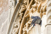 Pigeon on the ancient wall — Stock Photo
