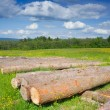 Spruce Timber Logging in Forest, Poland — Stock Photo