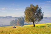 Countryside landscape, Poland — Stock Photo