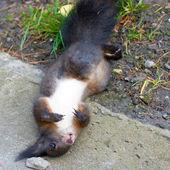 Dead squirrel — Stock Photo