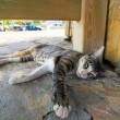 Cat lying in the street  — Stock Photo