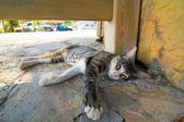 Gato tirado en la calle — Foto de Stock