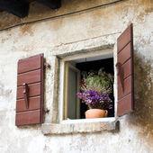 Window with Flowers, Dalmatia, Zadar, Croatia — Stock Photo