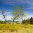 Landscape with tree — Stock Photo