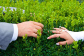 Holding hands newlyweds — Stockfoto