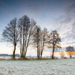 Sunrise over a field with frozen tree in the foreground.  — Stock Photo