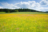 Green meadow under blue sky with clouds — Stock Photo