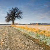 одиночные дерево в золотой восход — Стоковое фото
