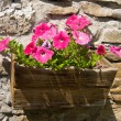 Flowers in flowerpot on wall — Stock Photo #26657573