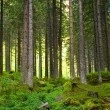 Stock Photo: Beautiful magic woods