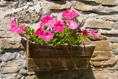 Flowers in flowerpot on wall — Stock Photo